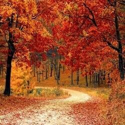 Autumn/Fall